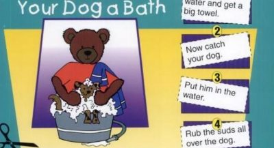 قصص انجليزية قصيرة مصورة للاطفال