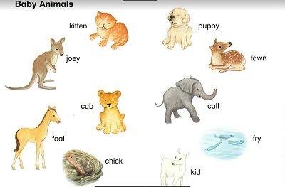 كتاب الحيوانات للاطفال , تعليم الاطفال عن الحيوانت ,كتب تعليمية للاطفال ,عالم الحيوان ,كتب علوم ,الحيوانات باللغة الانجليزية