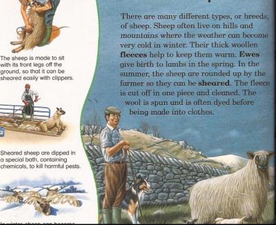 كتاب عن تربية حيوانات المزرعة للاطفال