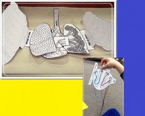اجزاء جسم الانسان بالصور للاطفال