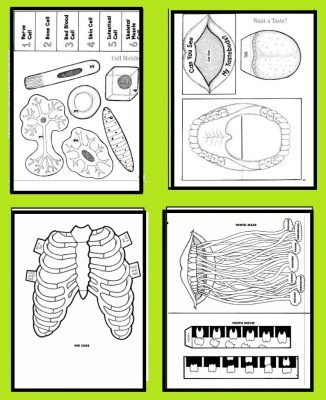 وسيلة تعليمية عن اجزاء الجسم